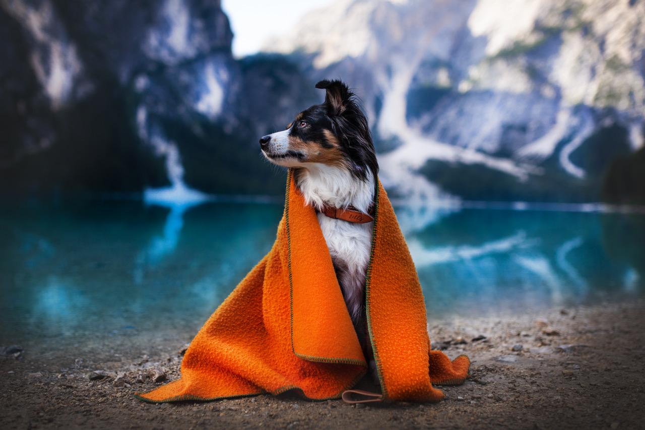 Hundedecke_Ansel