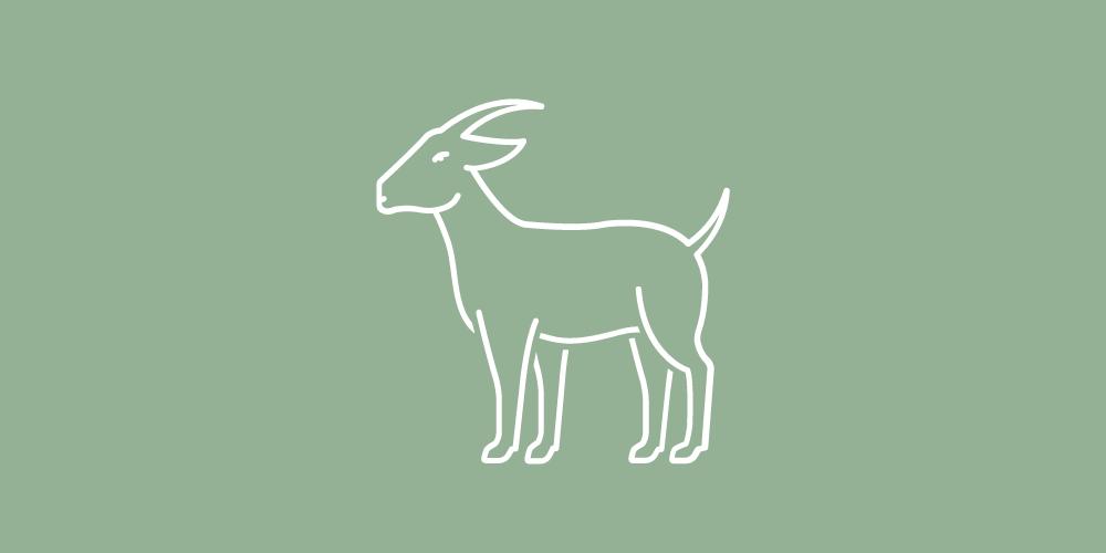 Lills_Hundefutter_Ziege_Hund