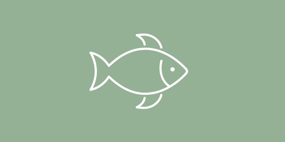 Lills_Hundefutter_-Fisch_-Hund