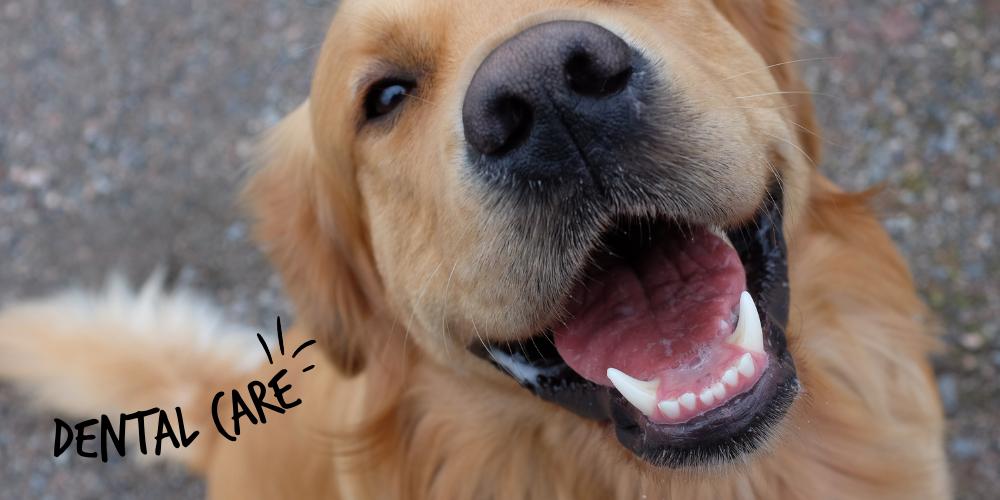 Lills_Dog_Dental-Care