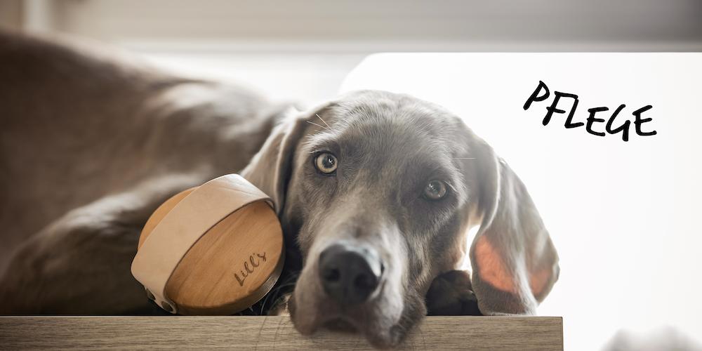 Hundepflege_Nachhaltig
