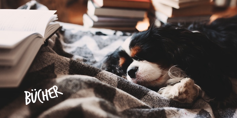 Lills-Store_Nachhaltige_Hundebuecher
