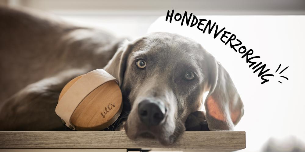 Lills_Honden_HONDENVERZORGING