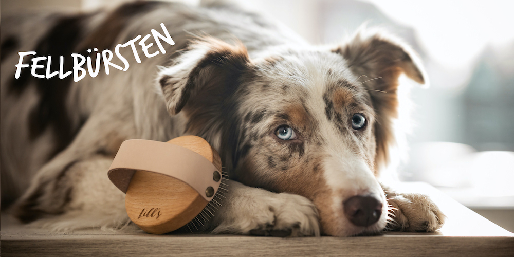 Dog-Store-Kategorien_Fellbu-rsten